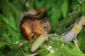 Squirrel sitting on a tree — Stock fotografie