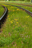 Flowers in the track — Stock Photo