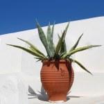 Mediterranean terracotta cactus pot — Stock Photo