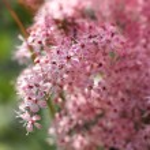 Spring feeling blossom — Stock Photo