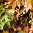 Stock Photo: Vintage autumn garden feeling