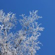 Frozen branches against blue sky — Stock Photo #39116829