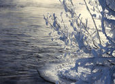 Frozen branches near open water — Stock Photo