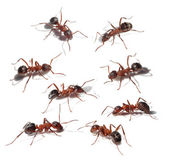 Group of ants collection — Foto Stock