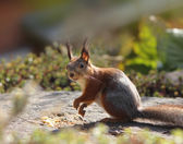 Funny squirrel in garden — Fotografia Stock