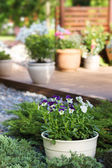 Summer garden patio — Stock Photo