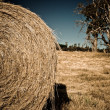 Stock Photo: Round bale of harvested hay