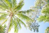 Beautiful tropical palm canopy — Stock Photo