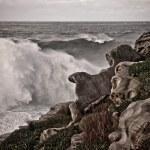 Постер, плакат: Stormy seas breaking on rocks