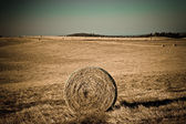 Round straw bale on agricultural field — Stock Photo