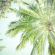 Canopy and fronds of a palm tree — Stock Photo