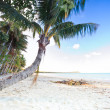 Golden tropical beach with a palm tree — Stock Photo #29362527