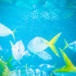 Underwater scene with fish swiming — Stock Photo