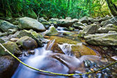 Stream flowing through lush rainforest — Stock Photo