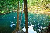 Beautiful lake in a rainforest — Stock Photo