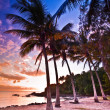 Sunset on a tropical beach — Stock Photo #29565463