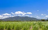 Green field with mountains in the background — Stock Photo