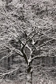 Winter tree. — Stockfoto