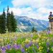 Stock Photo: Male hiker walking trail in mountains with wild flowers in purple
