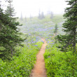 Stock Photo: Fog in NorWest forest hike trail with purple wild flowers.