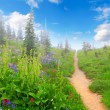 Mountain trail with wild flowers and trees. - Stock Photo