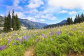 Naches Peak Loop Trail near Mt.Ranier hiking trail with wild flowers. — Stock Photo