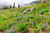 Mountain covered in wild flowers with fog and trees. — Stock Photo