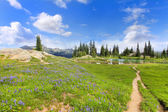 Wild flowers, hiking trail and lake at the Mt. Ranier National Park. — Stock Photo