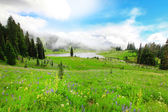 Green valley with wild flowers and lake in the fog. Mt.Rainier National Par — Stock Photo