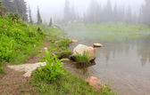 Mountain lake in the fog with rock and flowers. — Stock Photo