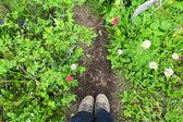 Wandelen schoenen op de trail met wilde bloemen en groene grassen. — Stockfoto