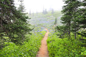 Fog in the NorWest forest hike trail with purple wild flowers. — Stock Photo