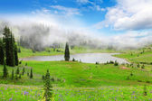 Green valley landscape with lake in fog with wild flowers. — Stock Photo