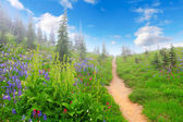 Mountain trail with wild flowers and trees. — Stock Photo