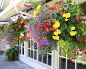 Many hanging baskets with flowers outside of house windows. — Stock Photo