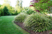 Green landscape in the backyard with large grass bushes. — Stock Photo