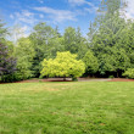 Backyard tree landscape with one beautiful tree. — Stock Photo #13751779