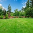 Green large fenced backyard with trees. - Stock Photo