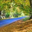 Fall blue road with orange leafs and large trees. — Stock Photo #13896759