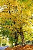 Fall orange and yellow trees near the road in Lenox, MA. — Stock Photo