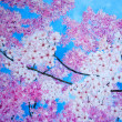 Cherry blossom painting. Modern pink ob blue. — Foto de Stock   #14133201