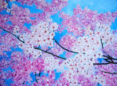Cherry blossom painting. Modern pink ob blue. — Stock Photo