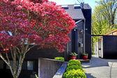 Ciemny czarny drewno nowoczesny dom z drzewa klonowego. — Zdjęcie stockowe