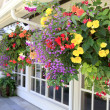Many hanging baskets with flowers outside of house windows. — Photo