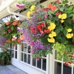 molti cesti appesi con fiori di fuori di windows di casa — Foto Stock