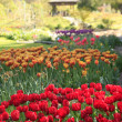 Stock Photo: Point Defiance park in Tacoma, WA. USA. Spring tulips bloom.