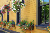 Flowers in hanging basket with yellow historical building. — Stock Photo