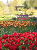 Point Defiance park in Tacoma, WA. USA. Spring tulips bloom. — Stock Photo