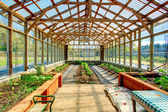 Big farm greenhouse — Stock Photo