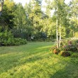 Flourishing farm backyard — Stock Photo #40034809